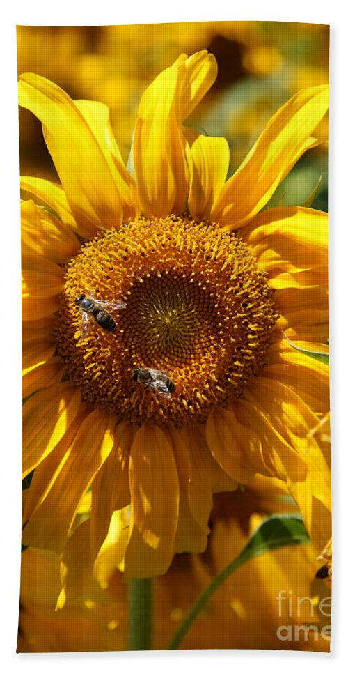 Sunflower Beach Towel featuring the photograph Yellow Sunflower by Christiane Schulze Art And Photography
