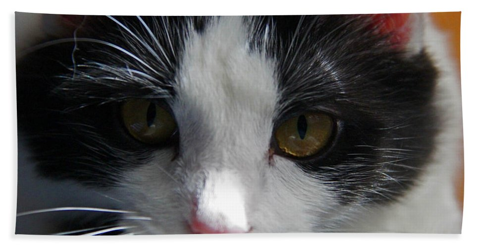 Cat Beach Towel featuring the photograph Yue Up Close by Andy Lawless