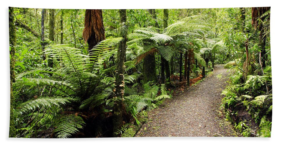Forest Beach Towel featuring the photograph Forest Trail by Les Cunliffe