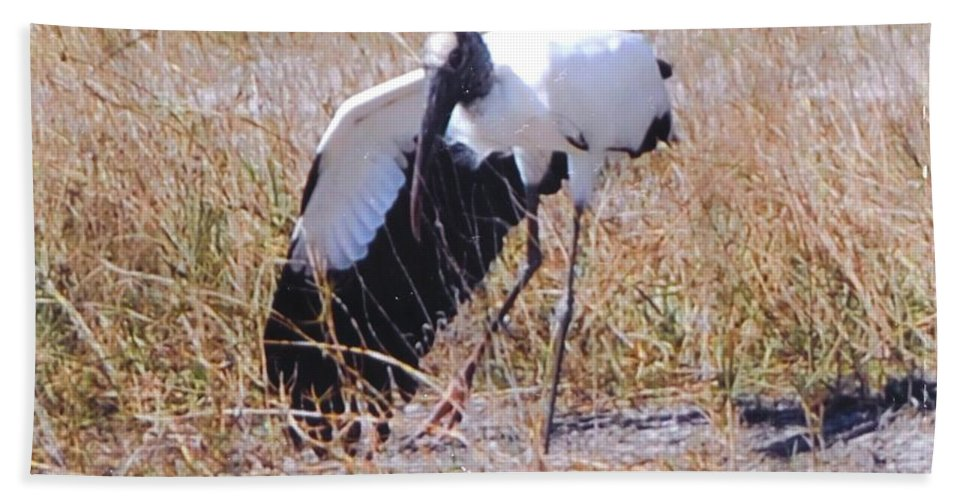 Stretching A Wing Beach Towel featuring the photograph Wood Stork by Robert Floyd