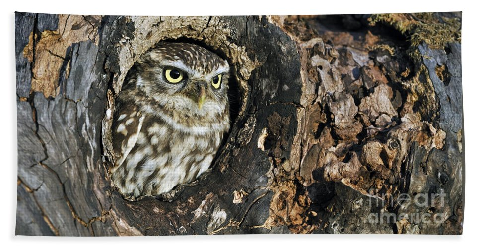 Little Owl Beach Towel featuring the photograph 100205p258 by Arterra Picture Library