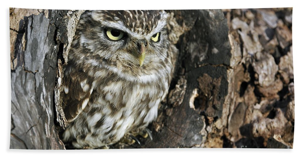 Little Owl Beach Towel featuring the photograph 100205p259 by Arterra Picture Library
