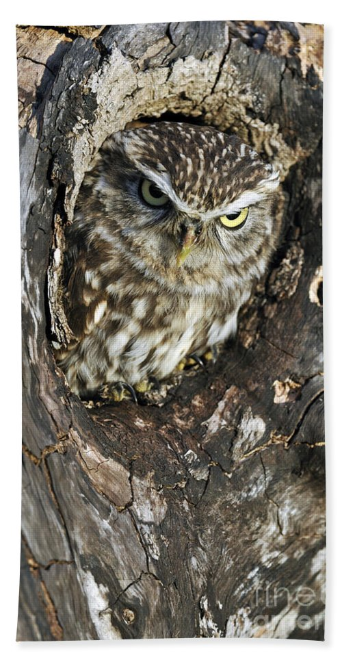 Little Owl Beach Towel featuring the photograph 100205p260 by Arterra Picture Library