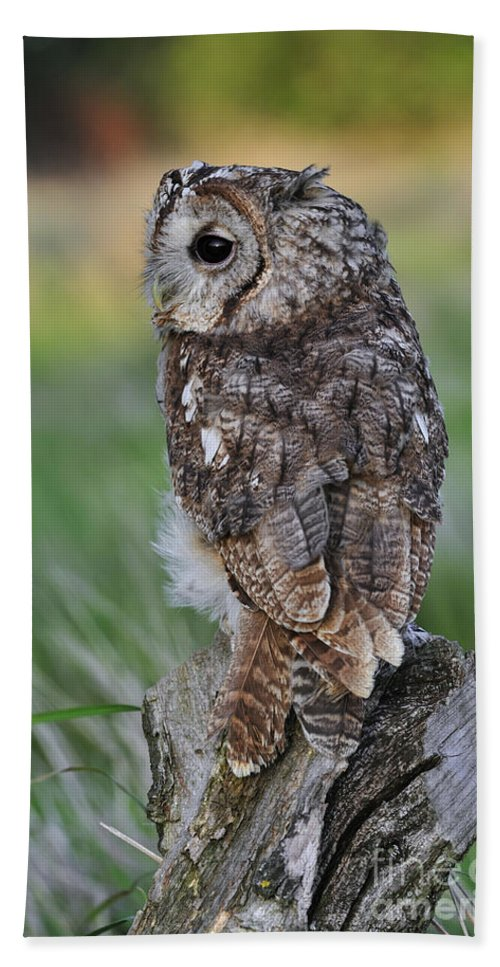 Tawny Owl Beach Towel featuring the photograph 100205p299 by Arterra Picture Library