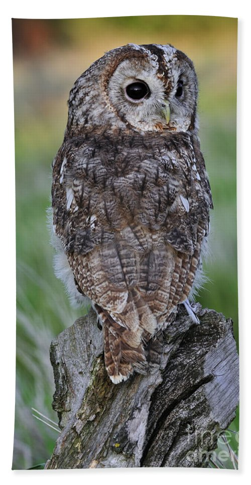 Tawny Owl Beach Towel featuring the photograph 100205p300 by Arterra Picture Library
