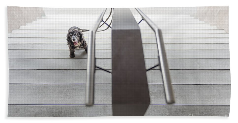 Stairs Beach Towel featuring the photograph Dog by Mats Silvan