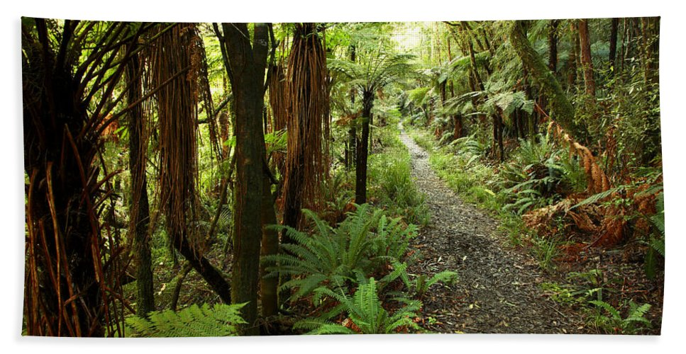 Bush Beach Towel featuring the photograph Forest Trail by Les Cunliffe