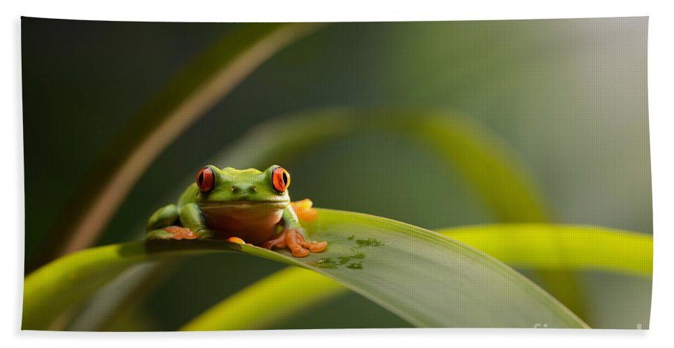 Red-eyed Tree Frog Beach Towel featuring the photograph Red Eyed Tree Frog by Scott Linstead