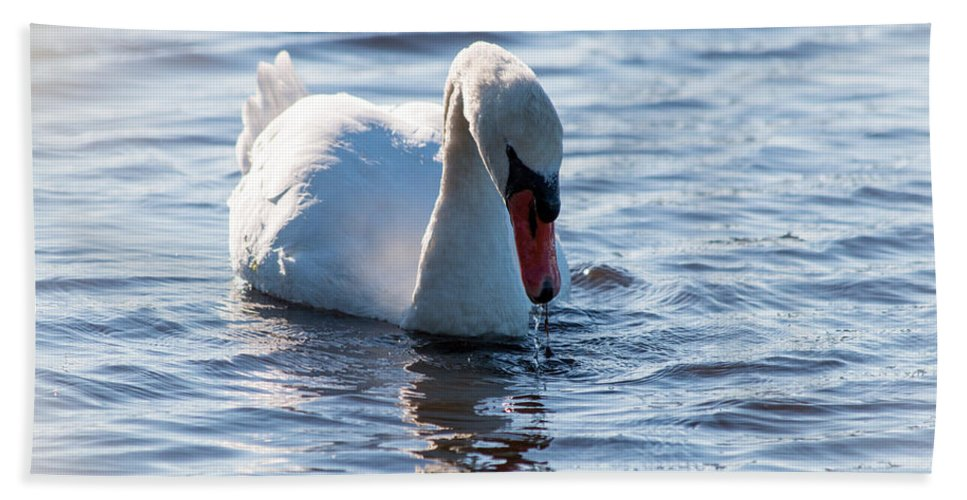 Bird Beach Towel featuring the photograph Swan by Gaurav Singh