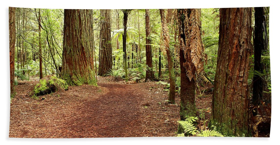 Forest Beach Towel featuring the photograph Forest by Les Cunliffe