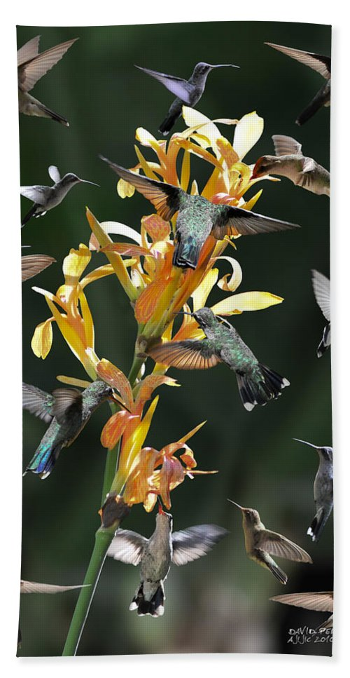 Hummingbird Beach Towel featuring the photograph 15 Hummingbirds by David Perry Lawrence