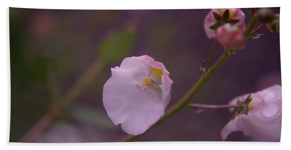 Flowers Beach Towel featuring the photograph A Soft Flower by Jeff Swan
