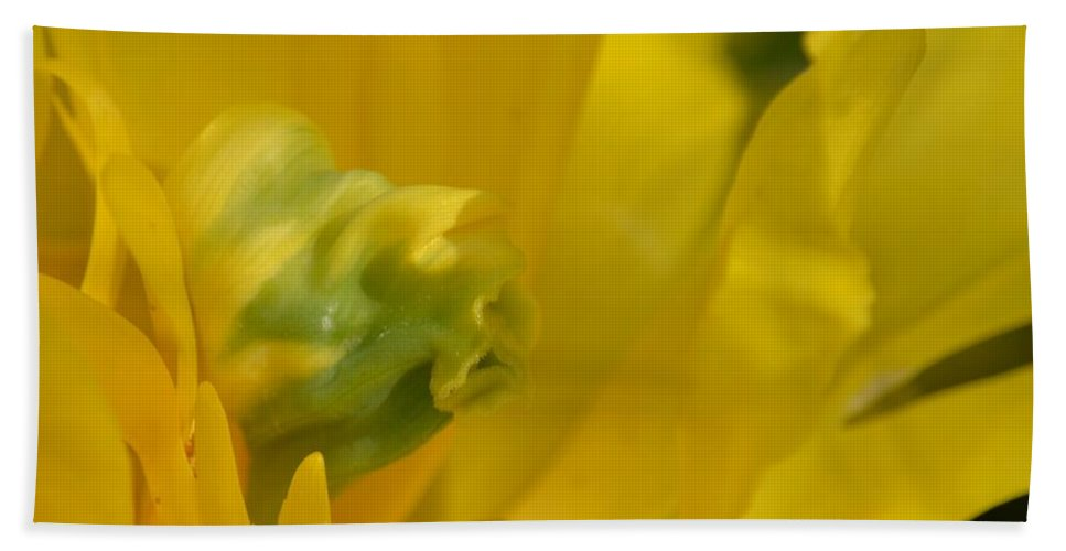 Abstract Parrol Tulip Beach Towel featuring the photograph Abstract Parrot Tulip by Maria Urso