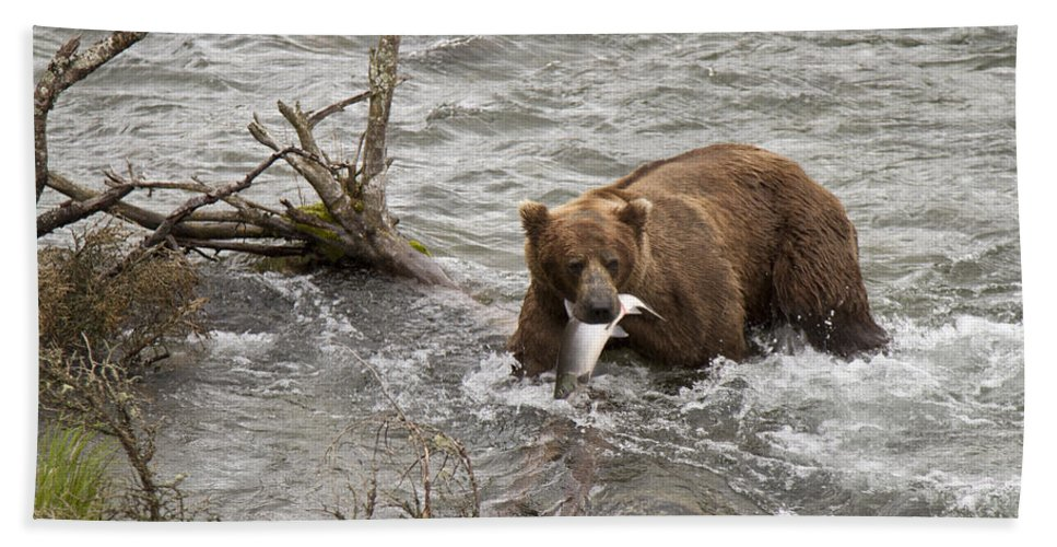 Alaska Beach Towel featuring the photograph Alaskan Grizzly by Dee Carpenter