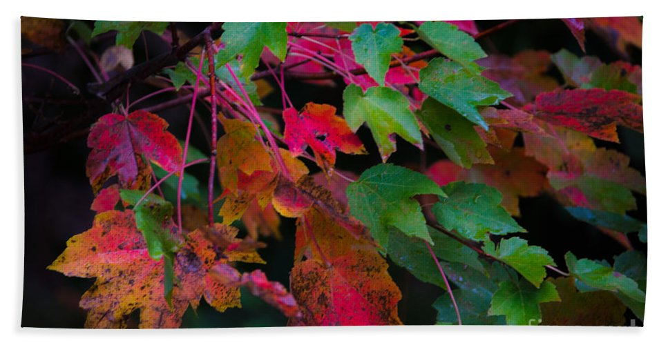 Fall Beach Towel featuring the photograph Autumn Leaves by Dale Powell