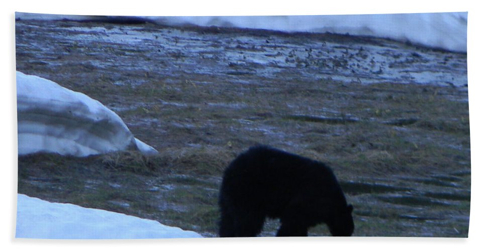 Snow Beach Towel featuring the photograph Black Bear by Sara Gravely- Comstock