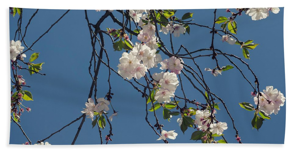 Spring Beach Towel featuring the photograph Blooming Trees by TouTouke A Y