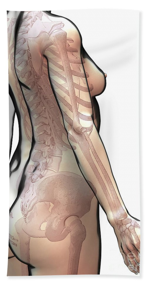 Digitally Generated Image Beach Towel featuring the photograph Bones Of The Upper Body Female by Science Picture Co