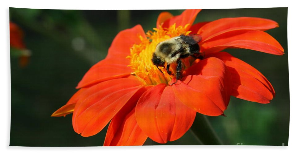 Mexican Sunflower Beach Towel featuring the photograph Bright Landing by Neal Eslinger