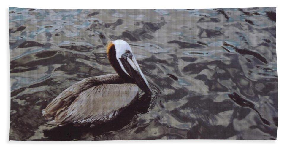 Matlacha Beach Towel featuring the photograph Brown Pelican by Robert Floyd