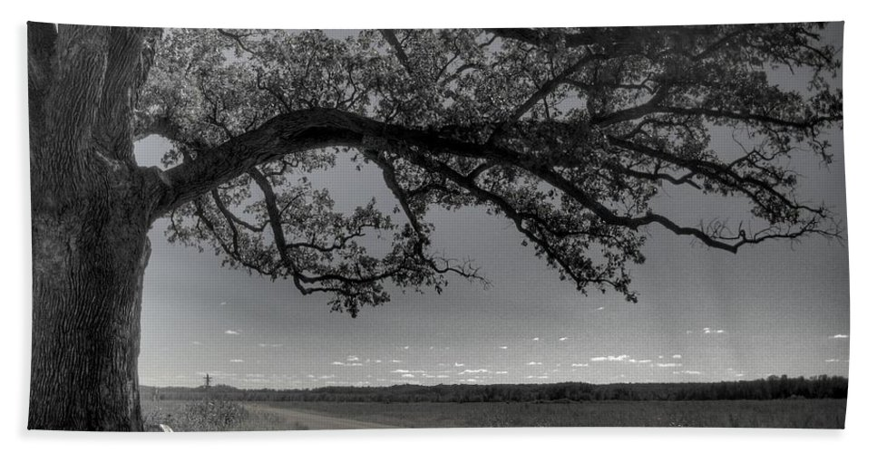 Bur Oak Tree Beach Towel featuring the photograph Burr Oak Tree by Jane Linders