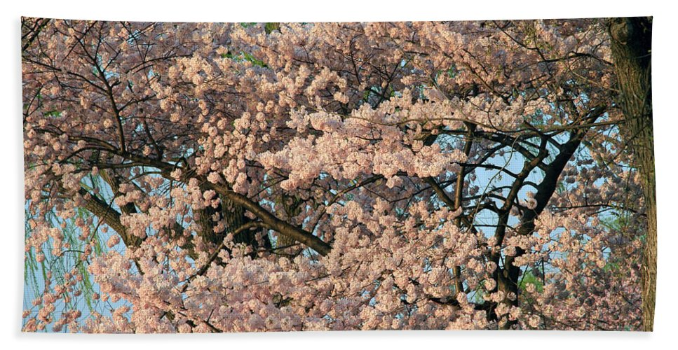 Cherry Blossom Beach Towel featuring the photograph Cherry Blossoms In Pink And Brown by Cora Wandel