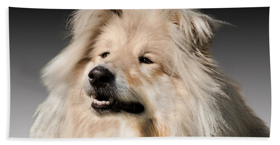 Black Background Beach Towel featuring the photograph Collie Dog by Linsey Williams