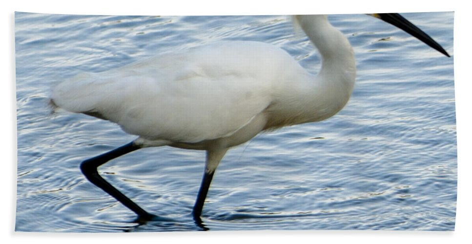 White Heron Beach Towel featuring the photograph Coastal Egret by Dale Powell