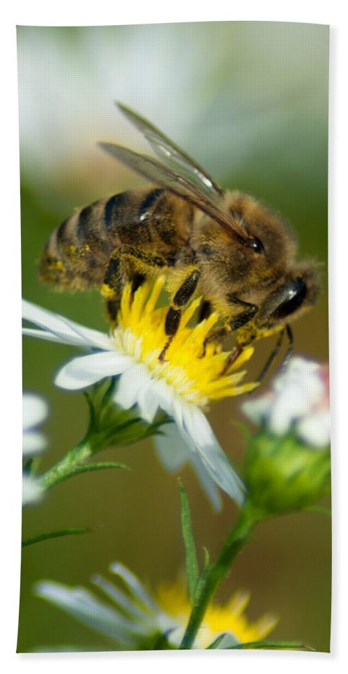 Optical Playground By Mp Ray Beach Towel featuring the photograph Flowering Bee by Optical Playground By MP Ray