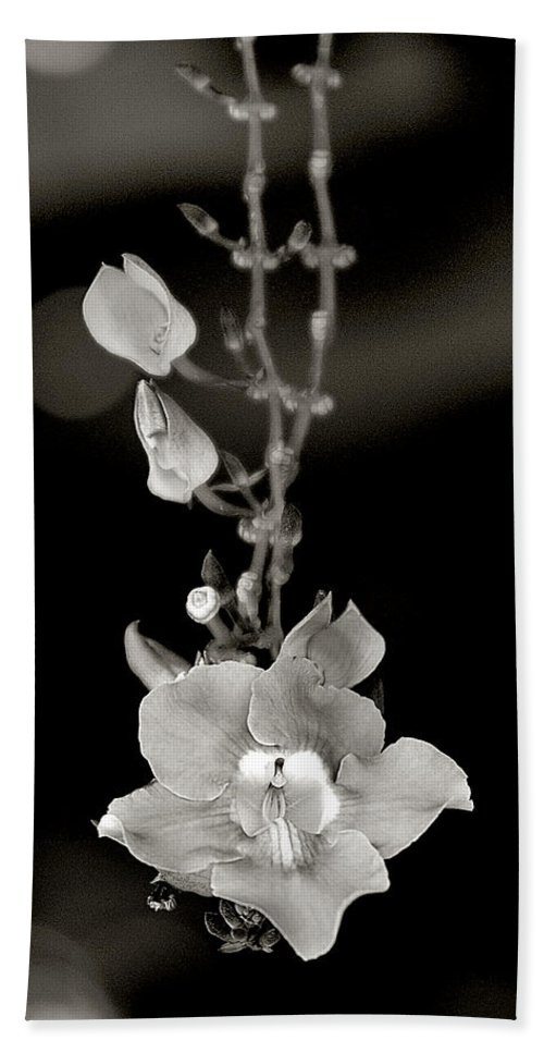 Floral Beach Towel featuring the photograph Heirloom by Doug Heslep
