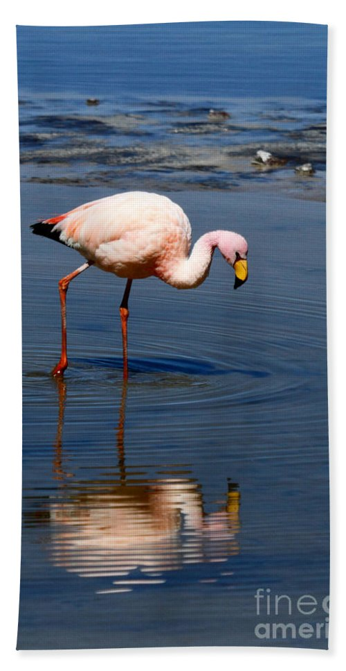 Flamingo Beach Towel featuring the photograph James Or Puna Flamingo by James Brunker