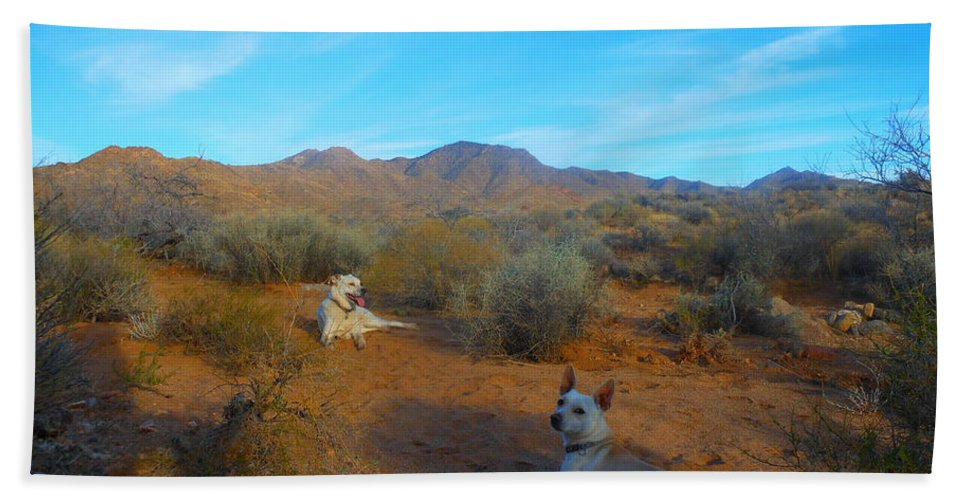 Dog Beach Towel featuring the photograph Mocha And Paco by James Welch