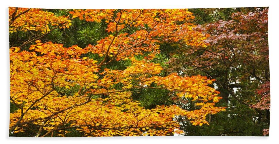 Mount Beach Towel featuring the photograph Mount Koya Koya San Japan by Ruth Hofshi