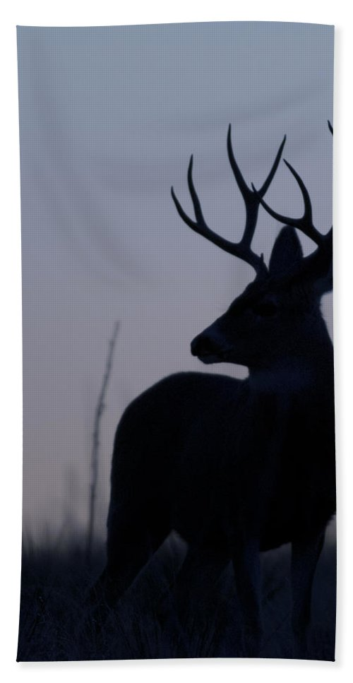 Mule Beach Towel featuring the photograph Mule Deer Buck At Sunset by Gary Langley