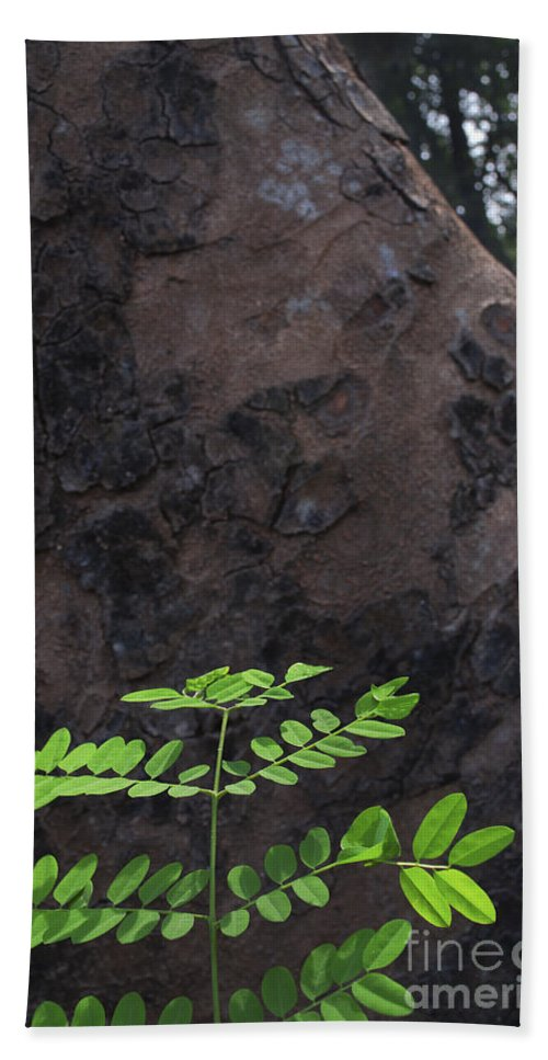 New Born Beach Towel featuring the photograph New Leaves Born On Old Tree by Rudra Narayan Mitra