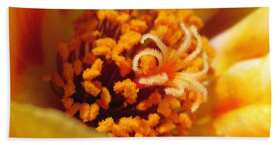 Mccombie Beach Towel featuring the painting Portulaca In Orange Fading To Yellow by J McCombie