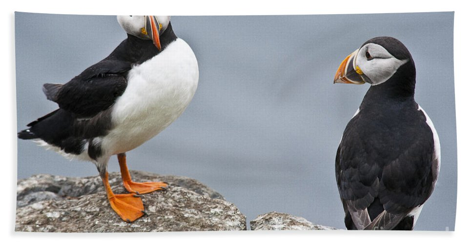 Puffin Beach Towel featuring the photograph Puffins by Heiko Koehrer-Wagner