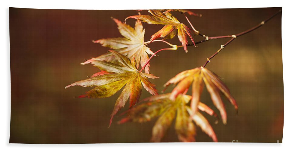 Acer Beach Towel featuring the photograph Reaching For The Sun by Anne Gilbert
