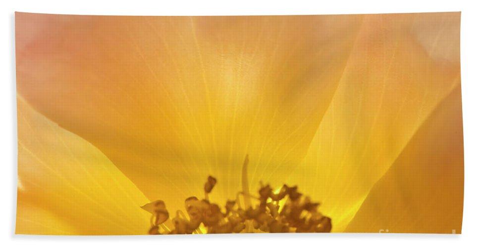 Heiko Beach Towel featuring the photograph Shining Christmas Rose by Heiko Koehrer-Wagner