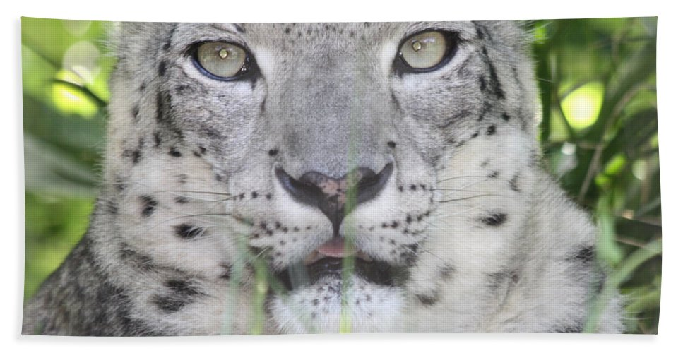Snow Leopard Beach Towel featuring the photograph Snow Leopard by John Telfer