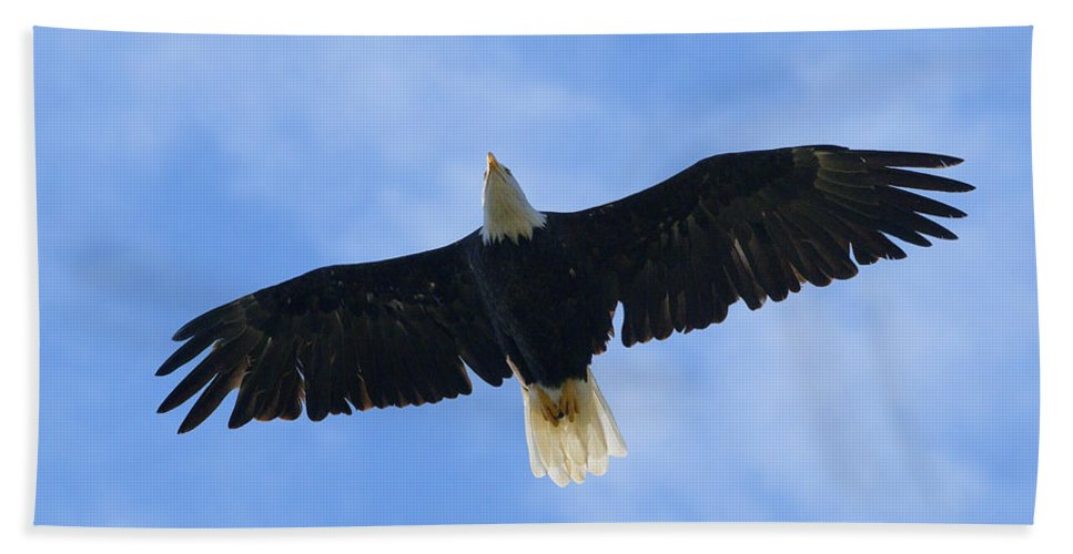Bald Eagle Beach Towel featuring the photograph Soaring High 2 Hdr by Sharon Talson