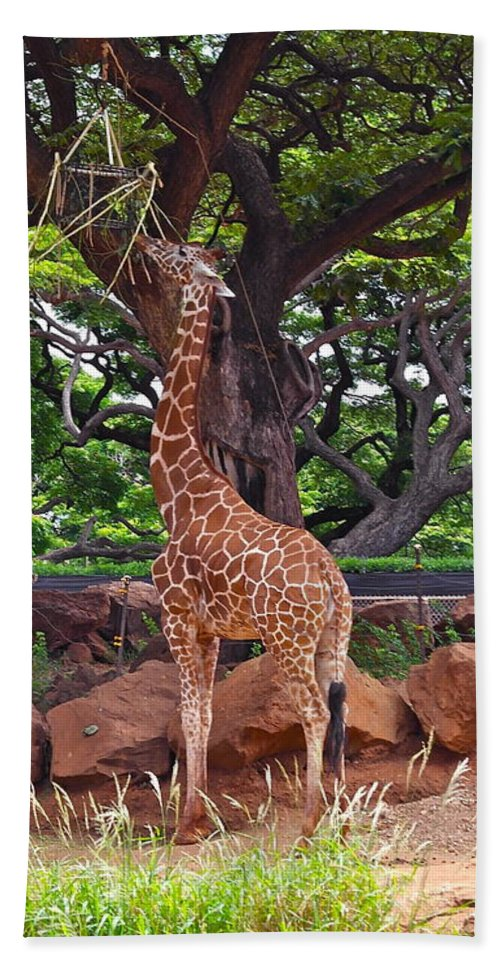 Giraffe Beach Towel featuring the photograph Stretching It by Michele Myers