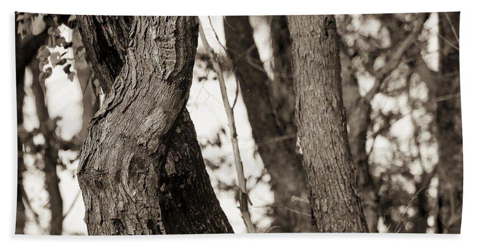Australia Beach Towel featuring the photograph Trees by Steven Ralser