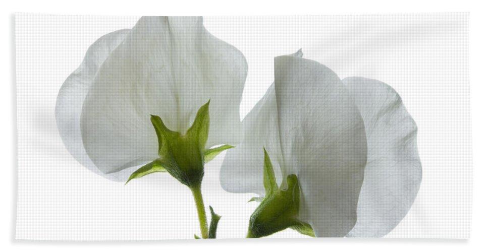 Sweet Pea Beach Towel featuring the photograph Two White Sweet Peas 2 by Ann Garrett
