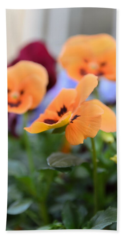 Art Beach Towel featuring the photograph Viola Tricolor Heartsease by Michael Goyberg