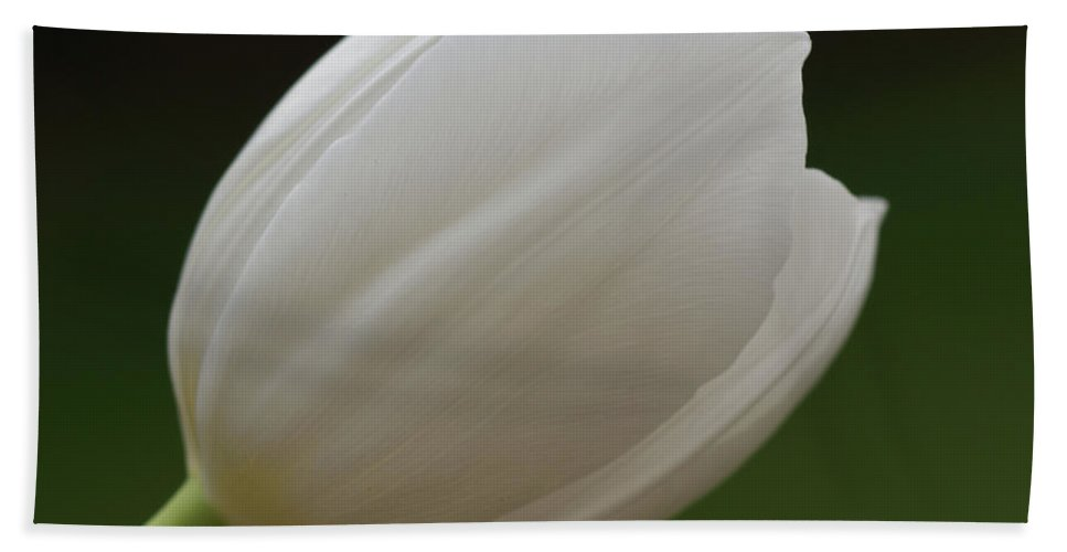 White Beach Towel featuring the photograph White Tulip 1 by Carol Lynch