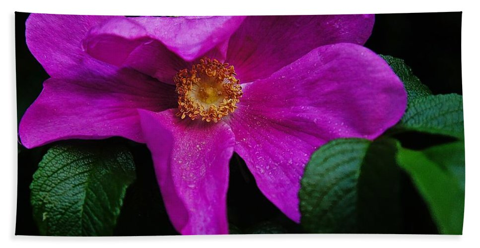 Rose Beach Towel featuring the photograph Withered Rose by Lilliana Mendez