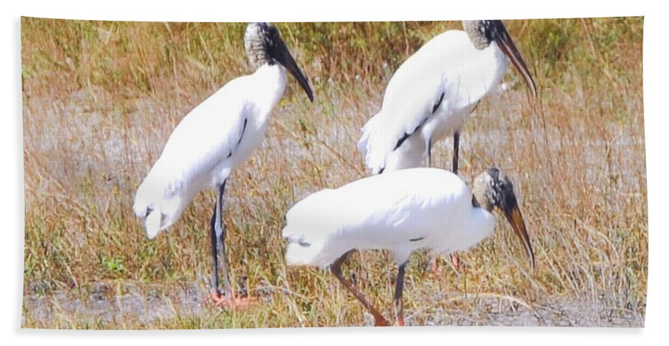 Gathering At Lakes Park In Ft.myers Beach Towel featuring the photograph Wood Storks by Robert Floyd