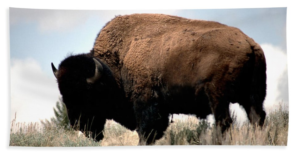 Bison Beach Towel featuring the photograph Yellowstone Bison by Sharon Elliott