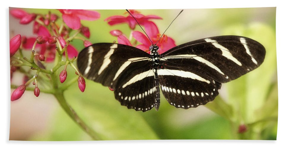 Heliconius Charithonia Beach Towel featuring the photograph Zebra Longwing Butterfly by Saija Lehtonen